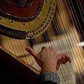 Harfe im Konzert